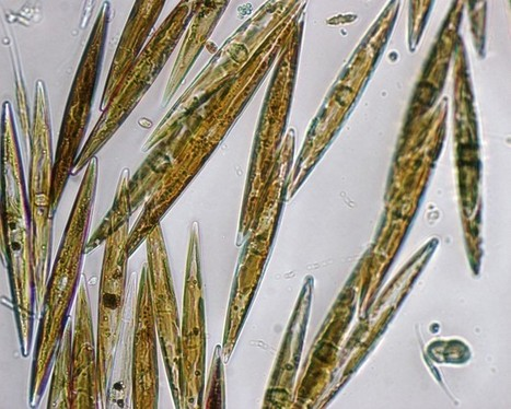 Acid oceans threaten creatures that supply half the world's oxygen | Outer Space | Scoop.it