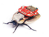 Is it illegal to implant a remote-control device in a cockroach? PETA asks AG ... - ABA Journal | Wireless Remote Control Training | Scoop.it