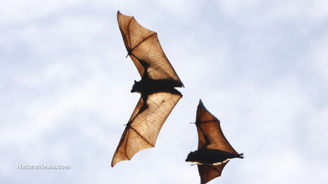 Wind turbines kill almost 1 million bats per year, because they confuse them with trees | Bat Biology and Ecology | Scoop.it