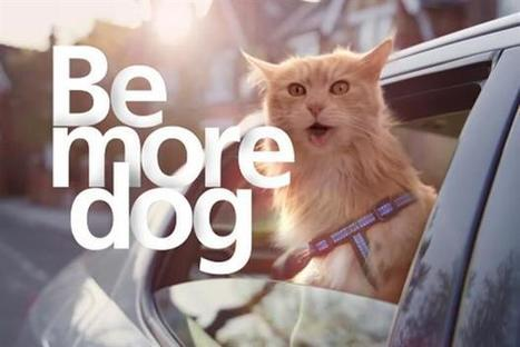 With a cat's view: be more dog or 'Older', 'Richer' and 'Wiser' | Designing  services | Scoop.it