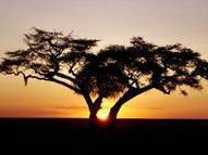 Eco-tourism helps to reverse rural exodus in South Africa | Sustainable Tourism | Scoop.it