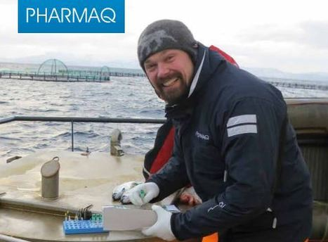 Press Release: Clinical research for PHARMAQ AS | Aquaculture Research & Development | Scoop.it