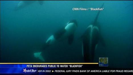 PETA encourages public to watch 'Blackfish' - KFMB News 8   Animal abuse   Scoop.it