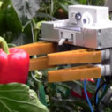 Robots Able to Pick Peppers, Test Soil, and Prune Plants Aim To Replace Farm Workers | Robots and Robotics | Scoop.it