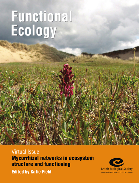 Mycorrhizal networks in ecosystem structure and functioning | Chimie verte et agroécologie | Scoop.it