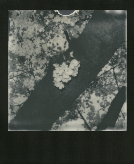 Nobuyoshi Araki: Sakura | Film Photography Rules! | Scoop.it