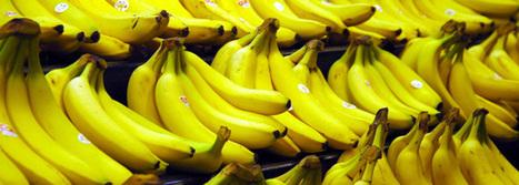 Quand les poulets jouent avec les bananes...   Prestataire & Conseil en communication digitale   Scoop.it