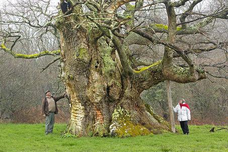 Et si votre jardin hébergeait l'arbre de l'année ?   Les colocs du jardin   Scoop.it