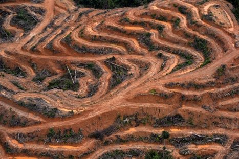 A Tangle of Conflicts: The Dirty Business of Palm Oil | Mrs. Jennings AP Human Geography | Scoop.it