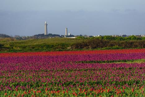 Toilapol - Bretagne - Finistère :  le temps des tulipes (5 photos dont 2 panoramas de 3 000 px) © Paul Kerrien - http://toilapol.net | photo en Bretagne - Finistère | Scoop.it
