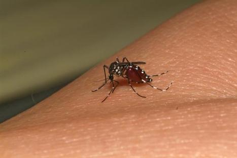 Chikungunya poised to invade the Americas | Sustain Our Earth | Scoop.it