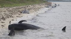 Experience South Carolina's beaches - USA TODAY   Travel Exotics of the world   Scoop.it