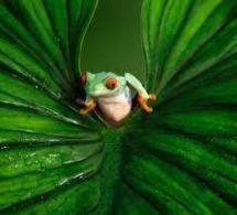 Une petite grenouille à trois doigts découverte dans le sud du Brésil | TAHITI Le Mag | Scoop.it