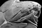 How Cheeky: Fossil Fish Is Oldest Creature With a Face | Freefire Nature | Scoop.it