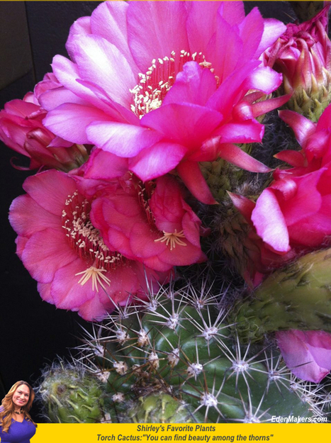 Torch Cactus: Beautiful Flowers Among Thorns   Annie Haven   Haven Brand   Scoop.it