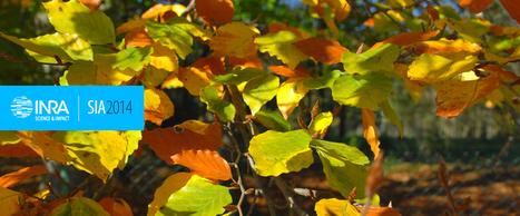 INRA - Dossier : Quand le réchauffement climatique perturbe les saisons du vivant   Réseau Tela Botanica   Scoop.it
