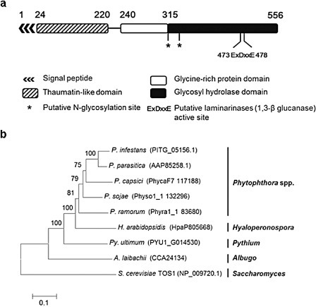 A novel elicitor protein from Phytophthora parasitica induces plant basal immunity and systemic acquired resistance - Chang - 2014 - Molecular Plant Pathology - Wiley Online Library | Host-pathogen interaction | Scoop.it
