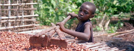 Slavery in the Chocolate Industry | Food Empowerment Project | Humanity | Scoop.it