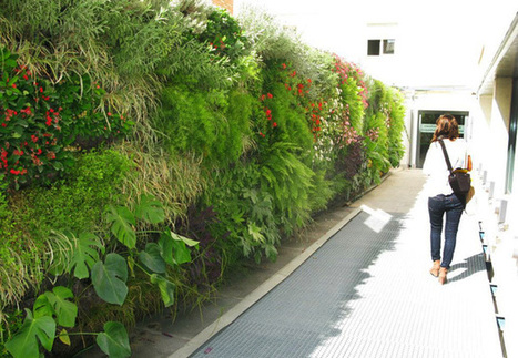 Los jardines verticales de Terapia Urbana | Andalucía Creative » Innovación, Tecnología, Internet, Diseño | Jardines Verticales y azoteas verdes. | Scoop.it