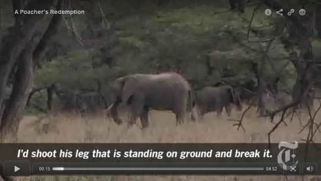 A Poacher's Redemption | Geography Education | Scoop.it