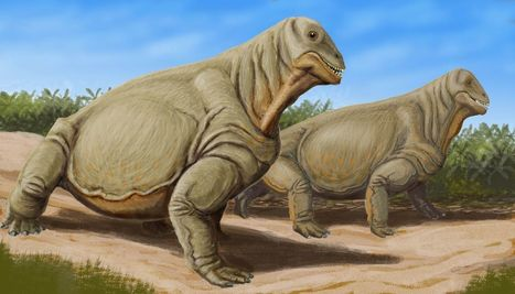 Permien-Trias : l'extinction massive due à une hausse des températures ? | Aux origines | Scoop.it