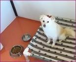 Houston pet boarding for your dog | Houston pet boarding for your dog | Scoop.it