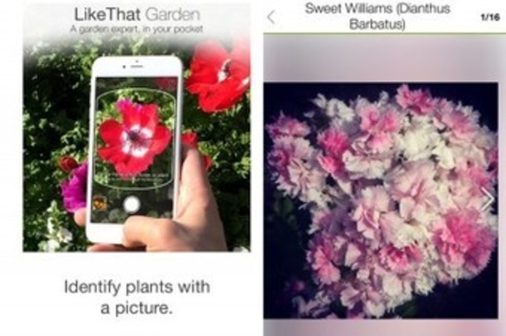 An easy way to answer the question: What is that flower? | Garden apps for mobile devices | Scoop.it