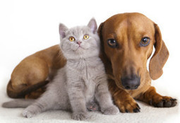 Pet sitter in Magnolia, TX by Jan's Animal Nanny Service | Jan's Animal Nanny Service | Scoop.it