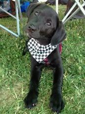 Supporting Search and Rescue Dogs   Pet News   Scoop.it