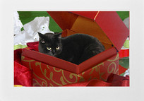 Black Cat In A Box Handmade Cat Christmas Card | Christmas Cat Ornaments and Cards | Scoop.it