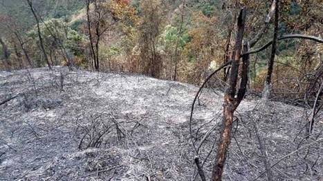 Hay más de 140 mil hectáreas deforestadas en Colombia: Minambiente - RCN La Radio | Un poco del mundo para Colombia | Scoop.it