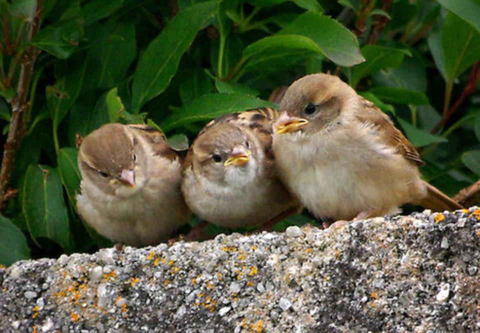 Kiezdeutsch: Sprichwort : der Spatz in der Hand ist besser als die Taube auf dem Dach | Hallo France,  Hallo Deutschland     !!!! | Scoop.it