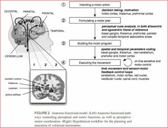 Learning Disabilities: Spoken Language/Motor Disorder-Dyspraxia | Cognition and Brain diseases | Scoop.it