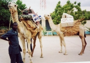 Camel Library Service | Book Aid International | Global Cultural Connections | Scoop.it