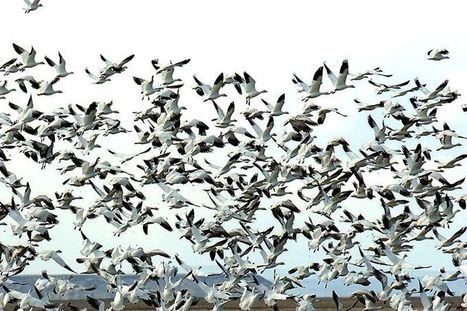 Did wildlife refuge standoff hurt Oregon's image? Maybe just a little   Birding in the news   Scoop.it