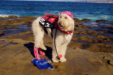 "I missed that on April's Fool :) ""PADI Launches Unique #Scuba Training for Pets"" | Dog Training - Mark Mendoza | Scoop.it"