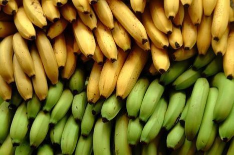 Bill Gates Likes His Bananas Genetically Modified – Do You? | Healthy Recipes and Tips for Healthy Living | Scoop.it