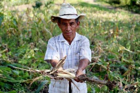 La sécheresse et le réchauffement climatique commencent à affamer l'Amérique centrale   territoires durables   Scoop.it