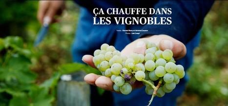 Télérama | Ça chauffe dans les vignobles | Vin, Culture & Société : articles, conférences, dossiers... en ligne | Scoop.it