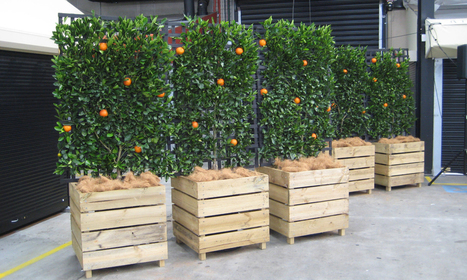 Get Well-maintained Indoor Plants at Plant Hire Melbourne | Foliage Indoor Plant Hire | Scoop.it