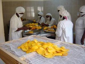 Maroc export appuiera la transformation agricole et industrielle au Sénégal | Agroalimentaire des Pays du Sud | Scoop.it