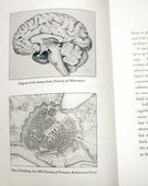 cityofsound: Journal: Of brains and cities; neuroscience and cultures of decision-making | comple-X-city | Scoop.it