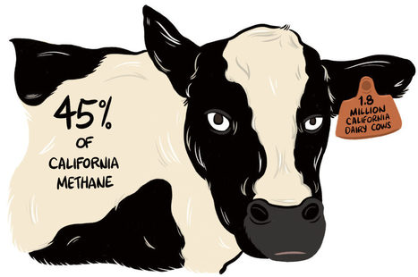 Wrangling the Climate Impact of California Dairy | Sustain Our Earth | Scoop.it
