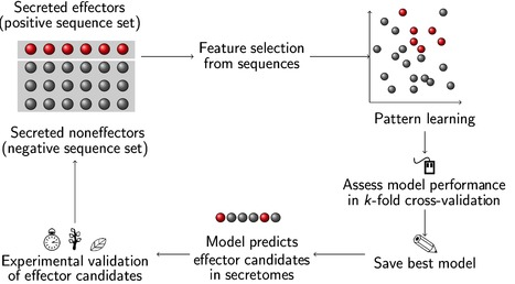 EffectorP: predicting fungal effector proteins from secretomes using machine learning | Genomics and metagenomics of microbes | Scoop.it