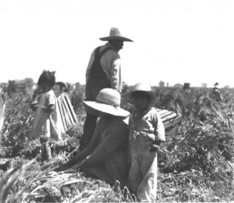 Pimary Source #3 : Field Workers – Carrots – Imperial Valley   Picture This   Mexican American During The 1930's   Scoop.it