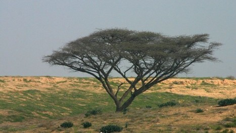 Get to the roots of Israel's historic trees | Jewish Education Around the World | Scoop.it