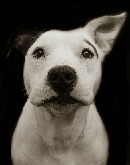 "TRAER SCOTT - Série ""Shelter Dogs Book"" 
