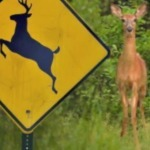 Confused Radio Caller Thinks the Deer Crossing Signs Are For the ... | Media and Broadcasting | Scoop.it