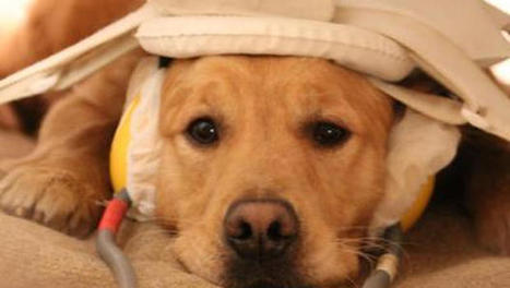 Dogs pick up on emotions the same way humans do: Study - CBS News | Dog Lovers | Scoop.it