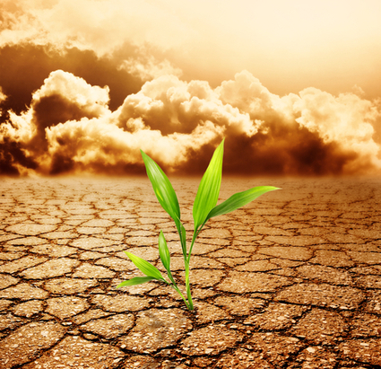 Un-Earthed: Is Monsanto's Glyphosate Destroying The Soil? | GreenMedInfo | Blog entry | Natural Medicine | Alternative Medicine | Integrative Medicine | Consumer Advocacy | Local Economy in Action | Scoop.it